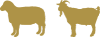 sheep-goat-icon